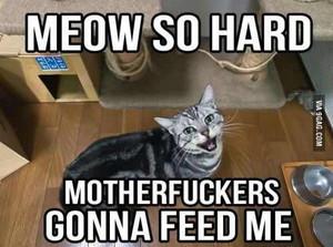 Meow Meme