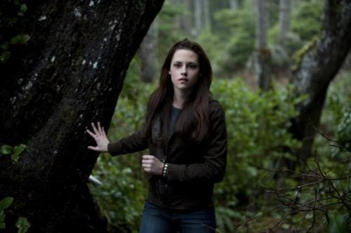 New Moon Movie wallpaper containing a sitka spruce, an american white birch, and a mahogany called Bella Swan beautiful <3