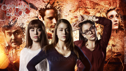 orphan black wallpaper possibly with a portrait titled orphan black wallpaper
