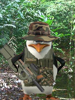 Skipper in the jungles of Mexico