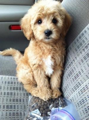 cute tuta dog