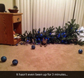 Christmas tree fell on a cat - random photo