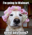A dog off to walmart - random photo