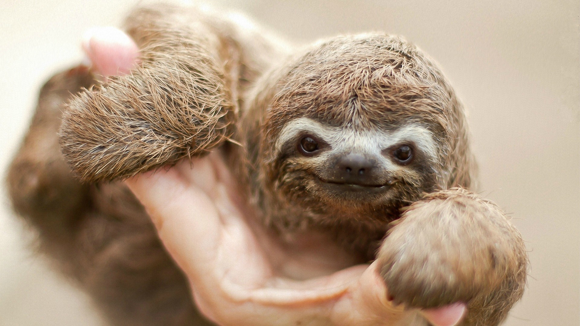 Sloth Pictures 62