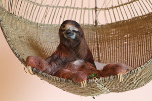 Queen of the sloths
