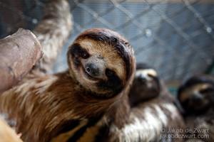 Slothing around
