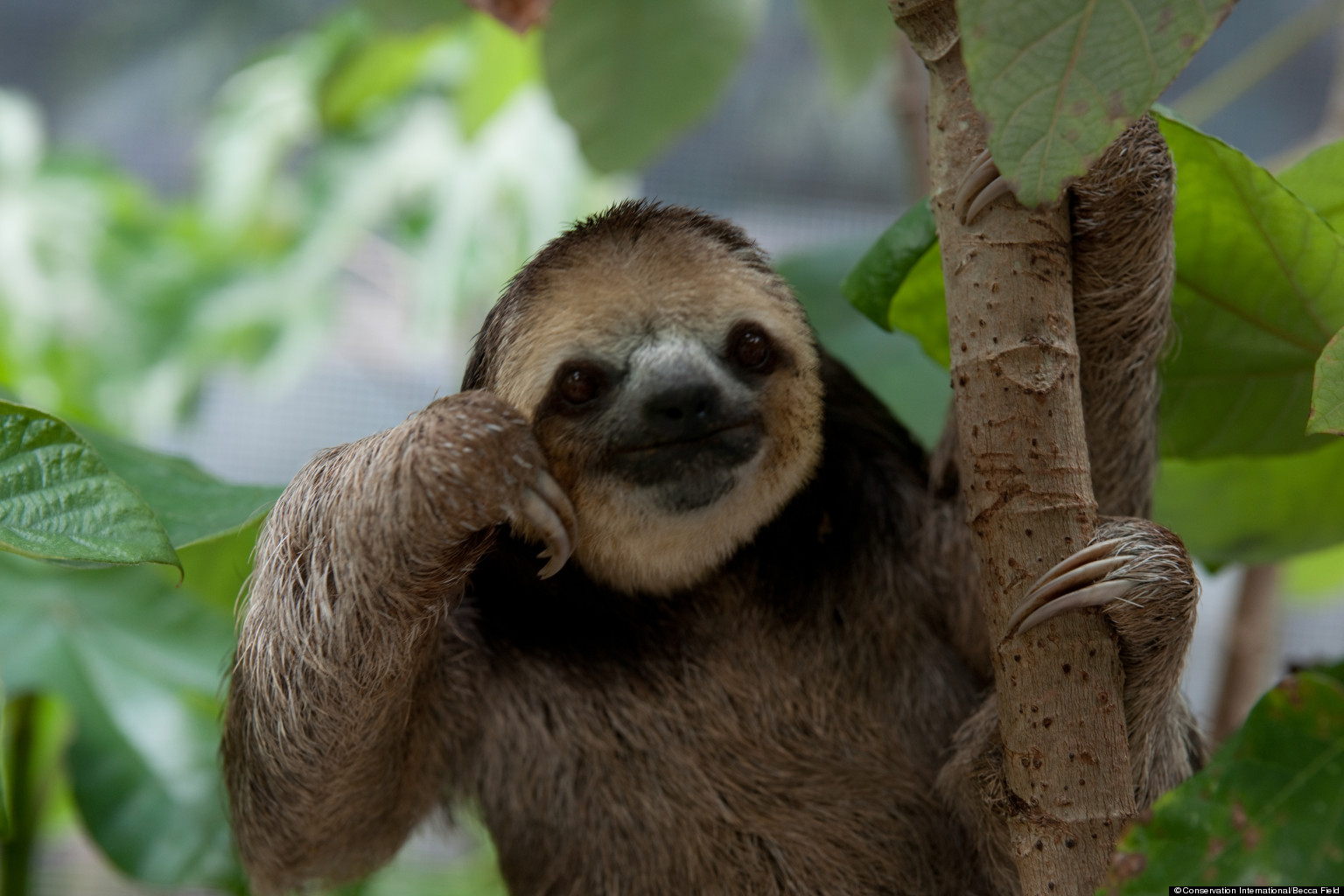 Philosophical Sloth
