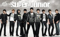 Super Junior Boy Bund