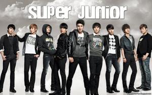 Super Junior Boy Bund