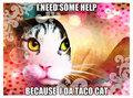Taco Cat - animal-humor fan art