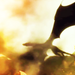 The Hobbit: An Unexpected Journey - Extended Clips icons | Smaug