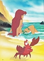 Walt Disney Book Images - Princess Ariel & Sebastian - walt-disney-characters photo