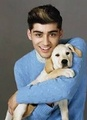 Puppy love - zayn-malik photo