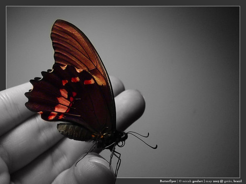 Beautiful Pictures wallpaper possibly containing a nymphalid titled butterfly