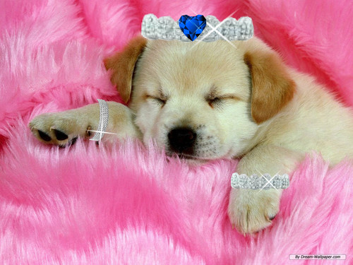 Dogs wallpaper entitled sleeping puppy
