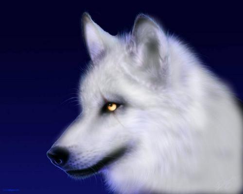 world of wolfs and werewolfs bilder white wolf hd hintergrund and background fotos 36161832. Black Bedroom Furniture Sets. Home Design Ideas