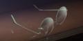 Yukari's Glasses....