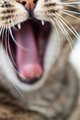 Cat's Mouth - cats photo