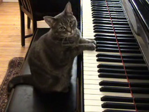 Nora, The piano Playing Cat