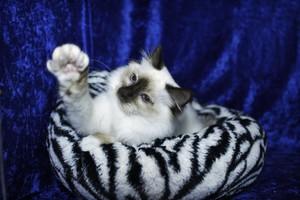 A Cute Little Kitty