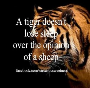A tiger doesn´t care