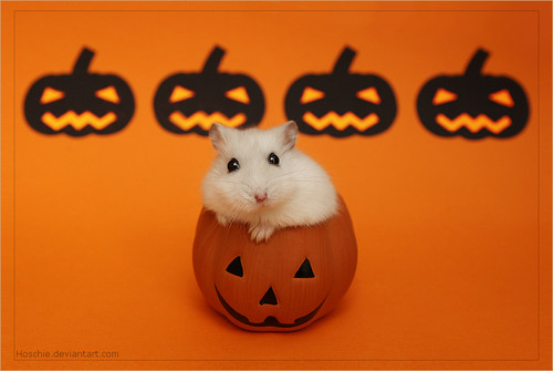 Hamsters wallpaper titled Hamster