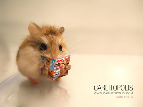 Hamsters wallpaper possibly containing a hamster and a mouse titled Hamster