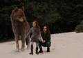 Snowflakes - jacob-black-and-renesmee-cullen photo