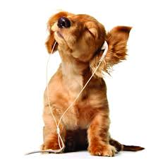 Музыка Dogie