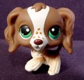 lps cocker spainel - littlest-pet-shop photo