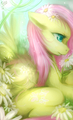 Discort,I will always want you! - my-little-pony-friendship-is-magic photo