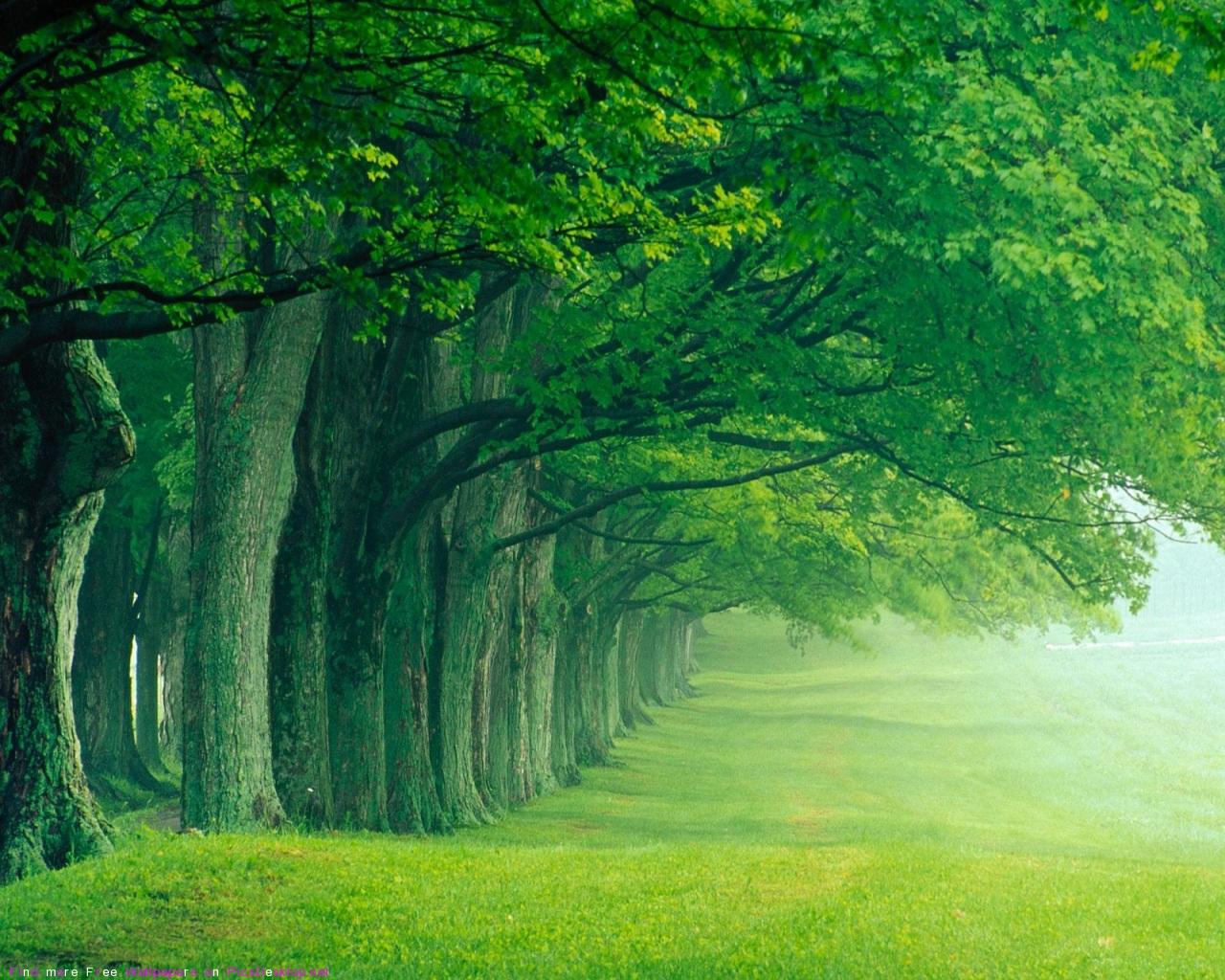 Green Forest - Nature Photo (36241521) - Fanpop
