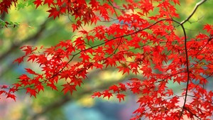 Autumn Season