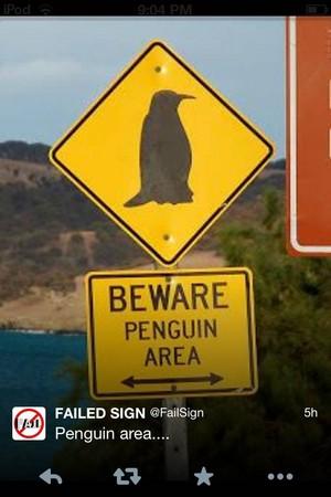 BEWARE. pingüino, pingüino de Area!