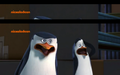 Skipper and kowalski....:OOO - penguins-of-madagascar photo