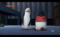 Crazy Rico - penguins-of-madagascar photo
