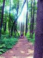 Forest Path - photography photo