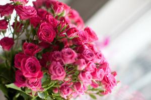 the color rosa