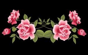 розовый rosey walls