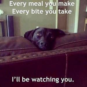 Dog watching toi eat