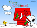 Merry Christmas Snoopy - snoopy photo