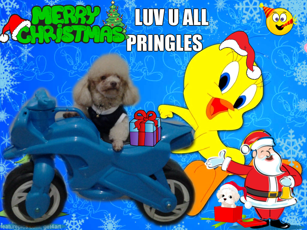 Tweety Bird Images Christmas Hd Wallpaper And Background Photos