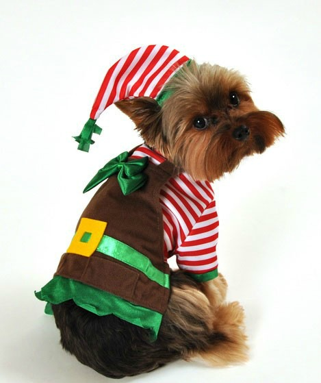 msyugioh123 images dog christmas wallpaper and background photos