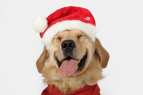 msyugioh123 images Smile Dog Christmas wallpaper and background ...