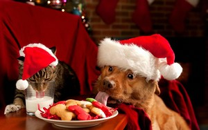 funny Dog Natale