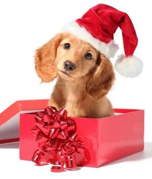 Santa Dog Weihnachten