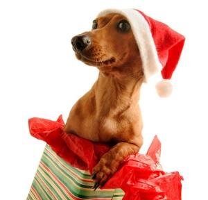 Santa dog クリスマス