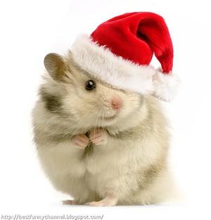Santa hamster