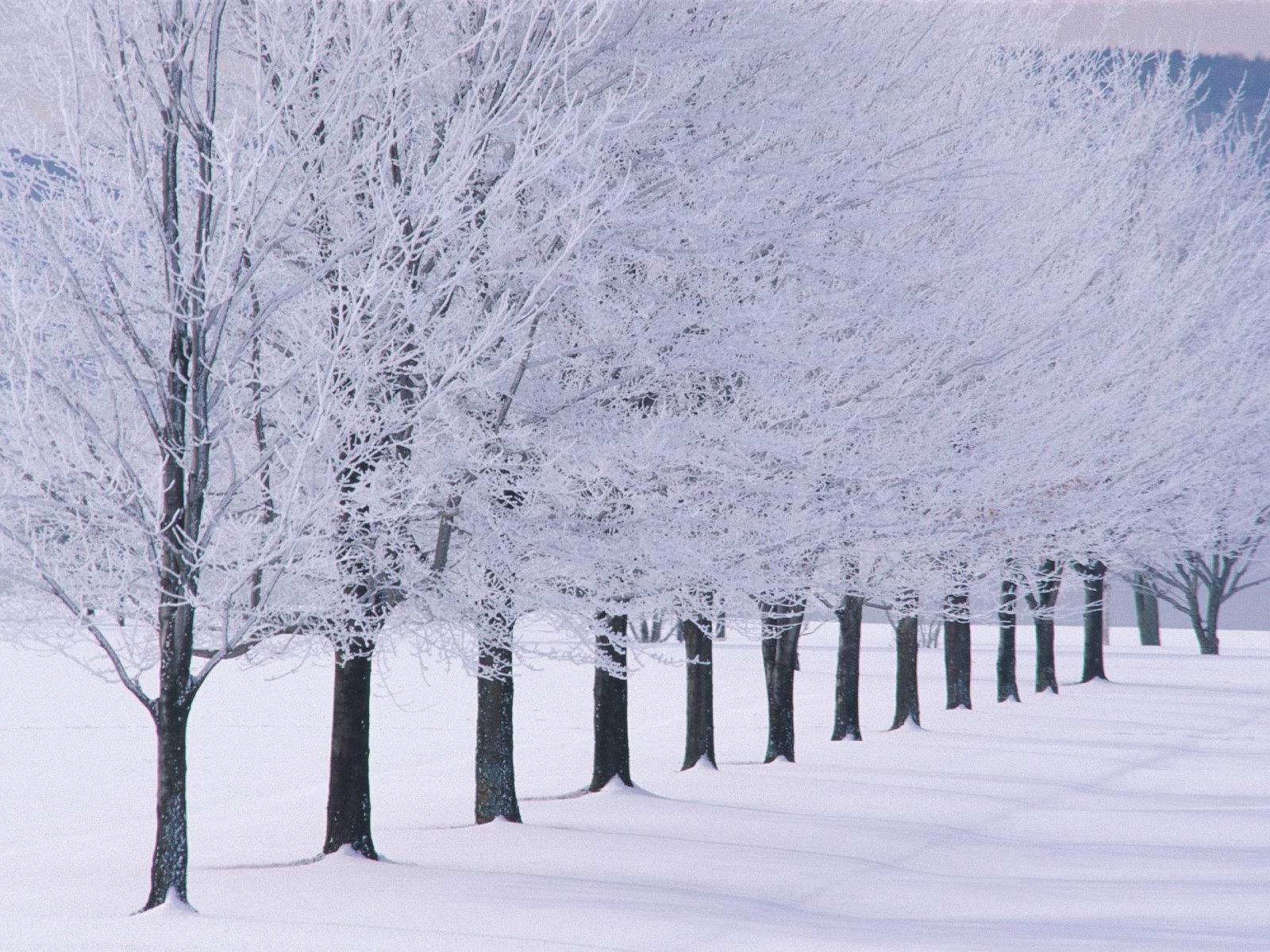 Snow Images In Winter HD Wallpaper And Background Photos