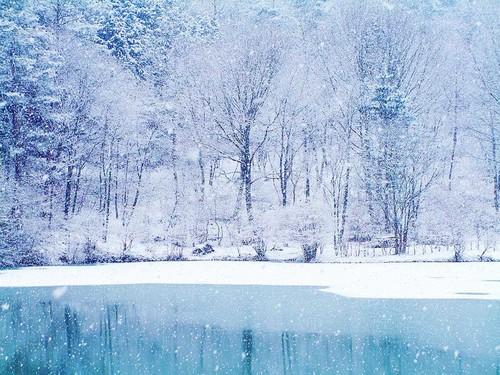 snow fond d'écran called Snow in Winter